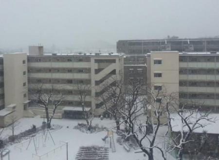 雪の落下にも注意